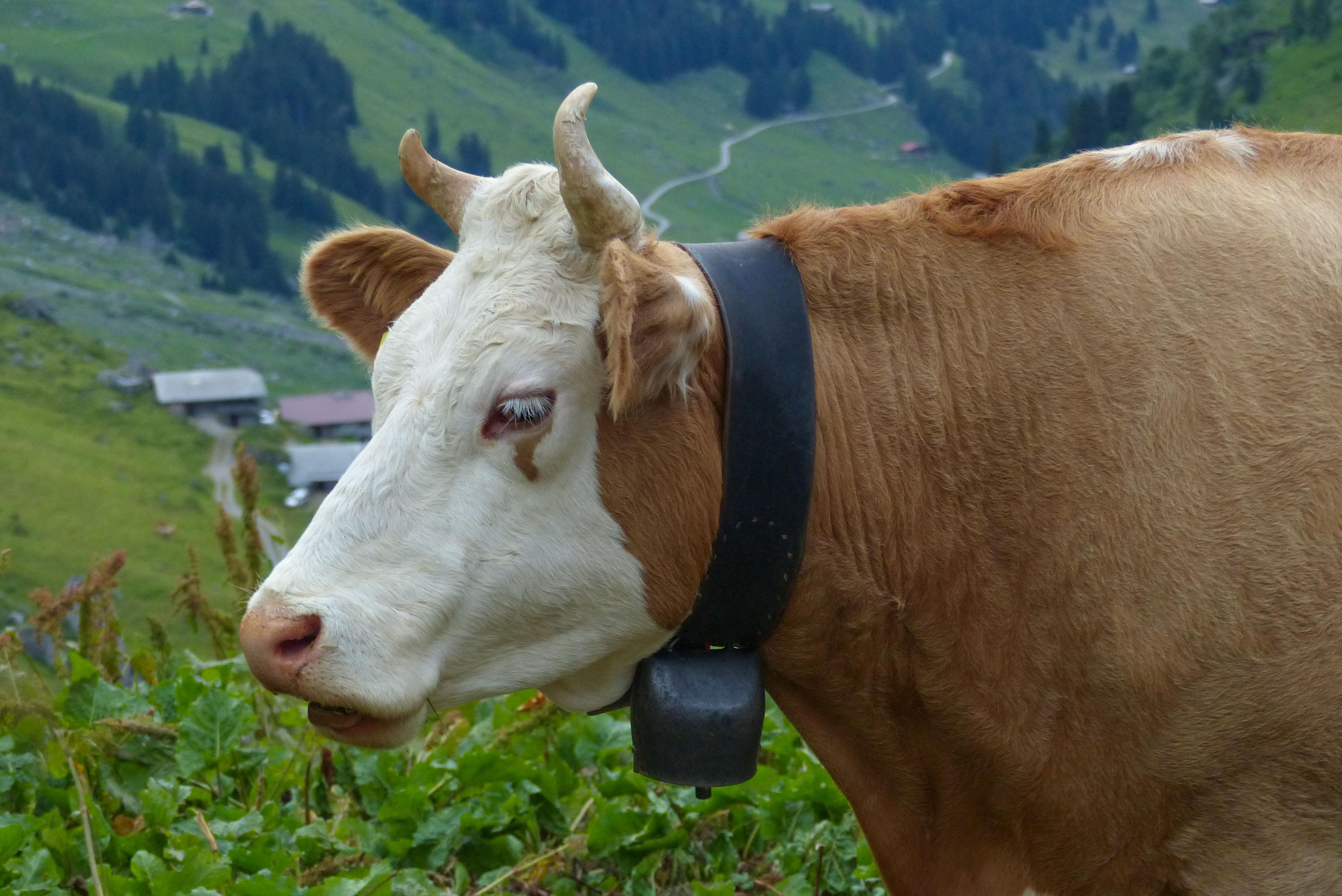 Die Nevensägen der Schweizer Berge (naja, jedenfalls wenn man schlafen will)